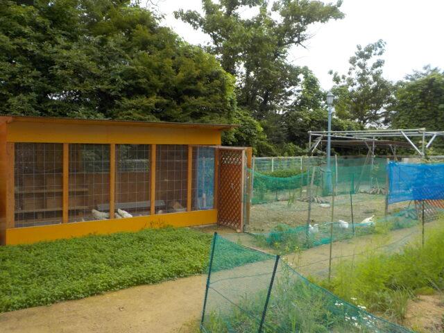 鶏舎 アローカナの飼育風景